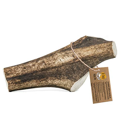 RF - DEER Hirschgeweih   Geweihstück Größe M   natürlicher Geweih-Kausnack für Hunde   gesunder Kauspielzeug   Kauknochen für Genuss und Zahnpflege   Hard Version